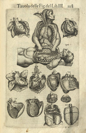 Exquisite, Disturbing Objects From 500 Years of Human Anatomical Science | mass media | Scoop.it