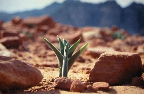 Le brevet miracle qui fait reverdir le désert | Chimie verte et agroécologie | Scoop.it