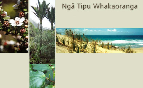 Māori Plant Use Database | Health Practices in NZ | Scoop.it