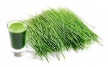 Barley Grass Has Highest Levels of Important Cancer-Killing Enzyme | Samantha's Year 9 Journal | Scoop.it
