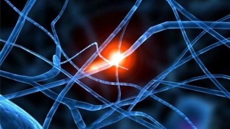El grafeno es el material ideal para implantes cerebrales | La clave está en la red | Scoop.it