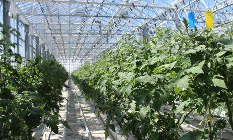 Greenhouse in the sky: inside Europe's biggest urban farm | (Culture)s (Urbaine)s | Scoop.it