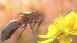 Des robots pour remplacer les abeilles ? Greenpeace lance une campagne choc | Chronique d'un pays où il ne se passe rien... ou presque ! | Scoop.it