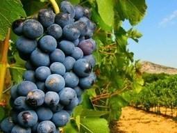 ¿Por qué los alimentos ecológicos tienen peor aspecto? La bioquímica y el sentido común lo explican | Matemáticas y la vida diaria | Scoop.it