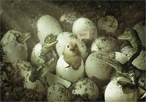 Inf'OGM - UE – Le faux retrait de Monsanto du marché européen des OGM | Abeilles, intoxications et informations | Scoop.it