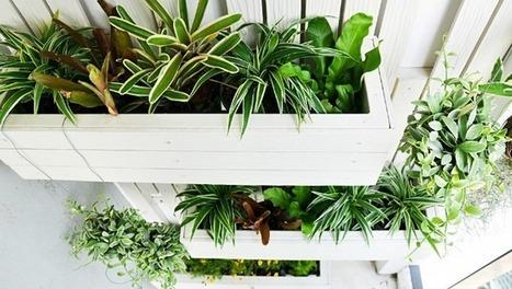 14 benefits of vertical gardens | Vertical Farm - Food Factory | Scoop.it