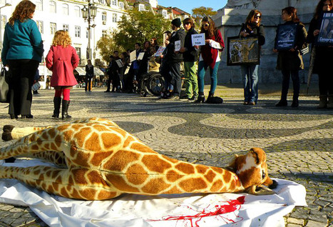 6 Signs That the Animal Captivity Industry Is Dying | Nature Animals humankind | Scoop.it