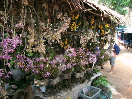 Les efforts de gestion et de protection de la flore sont fréquemment placés au second plan, après ceux en faveur de la faune, plus charismatique | Réseau Tela Botanica | Scoop.it