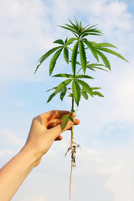 Marijuana, Alcohol, and Harm Reduction | Cannabinoid Issues | Scoop.it