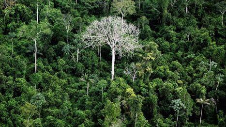 'Three centuries' to catalogue all Amazon tree species - BBC News | Jeff Morris | Scoop.it