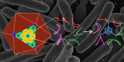 Scientists take key step toward custom-made nanoscale chemical factories | Post-Sapiens, les êtres technologiques | Scoop.it