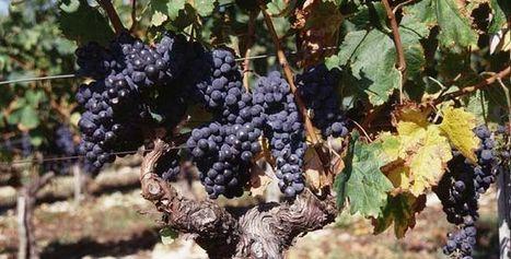 Les Vins de Bordeaux demandent un plus grand soutien de l'Etat | Le vin quotidien | Scoop.it