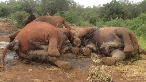 Kenya Wildlife Service struggles to stop poaching | GarryRogers NatCon News | Scoop.it