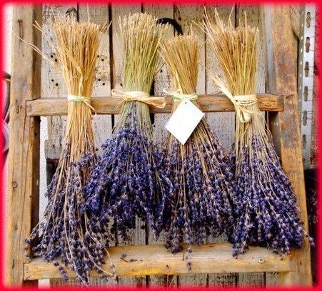 Lavender   Holistic & Alternative Health   Scoop.it
