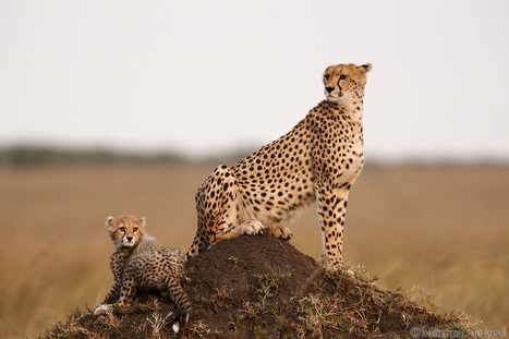 Kenya Packages, Kenya Tour Packages, Kenya holiday Packages | Stic Holidays | Scoop.it