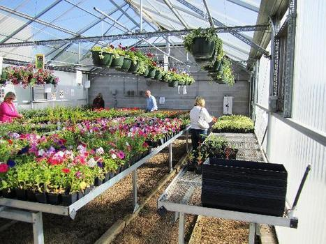 The Lazy Urban Gardener's Safety Net | Vertical Farm - Food Factory | Scoop.it