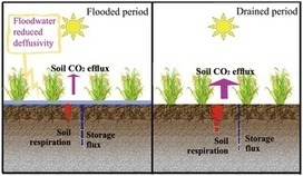 PLOS ONE: Carbon Dioxide Flux from Rice Paddy Soils in Central China: Effects of Intermittent Flooding and Draining Cycles | Rice origins and cultural history | Scoop.it