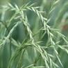 Plant genetics and statistics