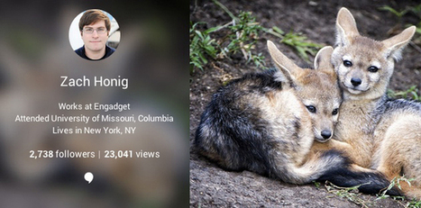 Google+ adds page view counts to user profiles | Google (For school) | Scoop.it
