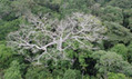 Amazon showing signs of degradation due to climate change, Nasa warns | Sustain Our Earth | Scoop.it