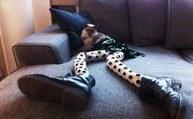 Meowtfit : Ou comment ridiculiser son chat avec des collants (Photos) - auFeminin.com | Actualite chaussure | Scoop.it