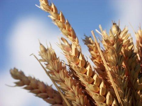 Terres agricoles : un bon investissement? Prix du m2 de terre agricole | Investissements Malin - Actifs tangibles,Vin, Art, Or... | Scoop.it
