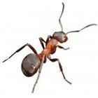Vancouver Pest Control | Richmond Pest Control | Scoop.it