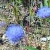 Las Plantas silvestres