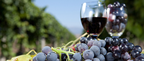 All About Wine | All about wine | Scoop.it