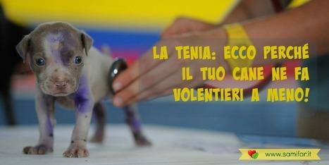 La tenia: ecco perché il tuo cane ne fa volentieri a meno! - Parafarmacia SamiFar di Borgo Cerreto | Benessere animale | Scoop.it
