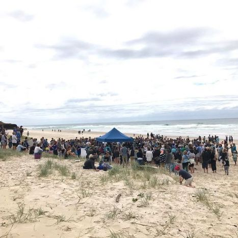 Hundreds rally against shark net plans in Ballina | Oceans and Wildlife | Scoop.it