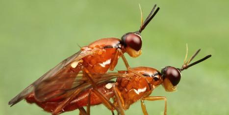 Les insectes aussi ont leur Kâmasûtra (PHOTOS)   Inter Nettoyage Service Bretagne   Scoop.it
