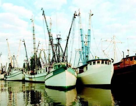 Gulf Coast Seafood: Back from the Brink | isantemagazine | On the Plate | Scoop.it
