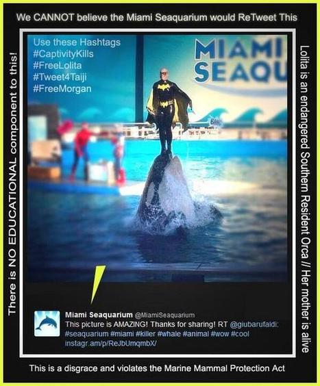 Twitter / Voice_OT_Orcas: Can u believe this? This photo ... | Honor the Orcas, Dive in! | Scoop.it