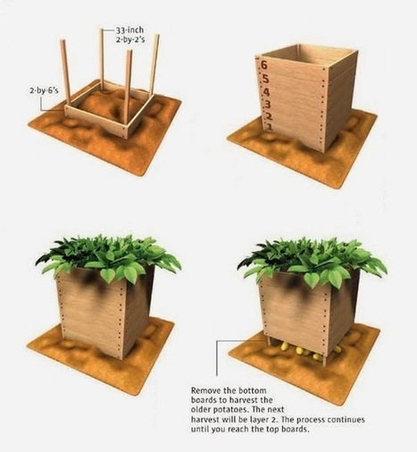 How to build and use a potato box | World In Green | Scoop.it