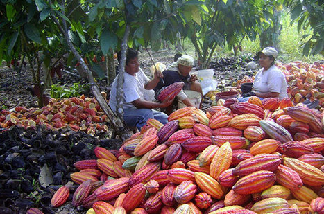 Revolutionizing Cocoa Farming in Peru | TechnoServe - Business Solutions to Poverty | Grain Storage Trends and Innovations Worldwide | Scoop.it