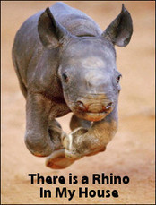 There Is a Rhino In My House - Lovely Documentary | Biodiversity IS Life -- Conservation,Ecosystems,Wildlife,Rivers,Water,Forests | Scoop.it