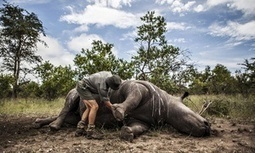 Africa is centre of a 'wildlife war' that the world is losing   Theme 3: Resources & the Environment   Scoop.it