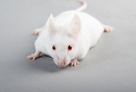 Mice Created From Stem Cells - Health News - redOrbit | leapmind | Scoop.it