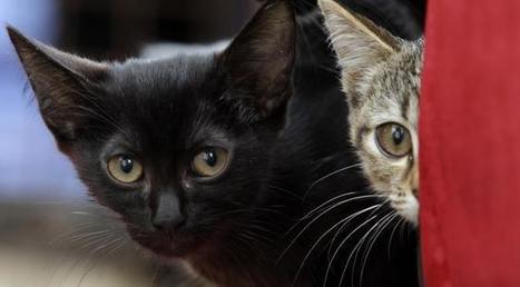 L'homme a cinq sens, le chat en a sept : voici à quoi ressemble le monde selon nos félins de compagnie | CaniCatNews-actualité | Scoop.it
