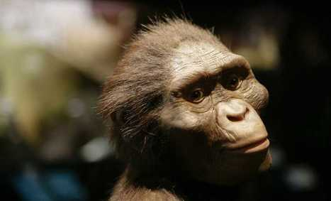 Lucy, our hominid cousin, may have died in a tragic fall from a tree | Aux origines | Scoop.it