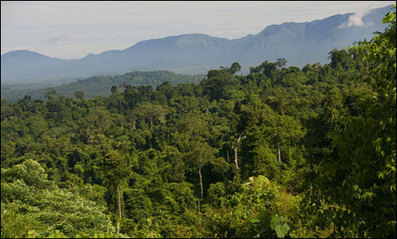 Cambodian jungle graveyard mystifies experts | Archaeology Updates | Scoop.it