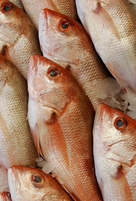 Survey Finds That Fish Are Often Not What Label Says | Intervalles | Scoop.it