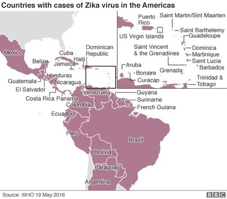 Zika crisis: WHO rejects 'move Rio Olympics' call - BBC News | Emerging Viruses, Virus Discovery and Virus Characterization | Scoop.it