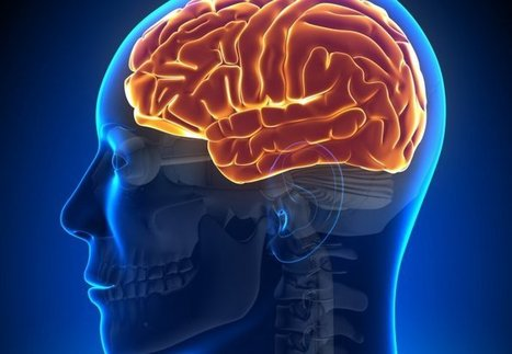 New study reveals complex speech networks in the brain - Imperial College London   Social Neuroscience Advances   Scoop.it