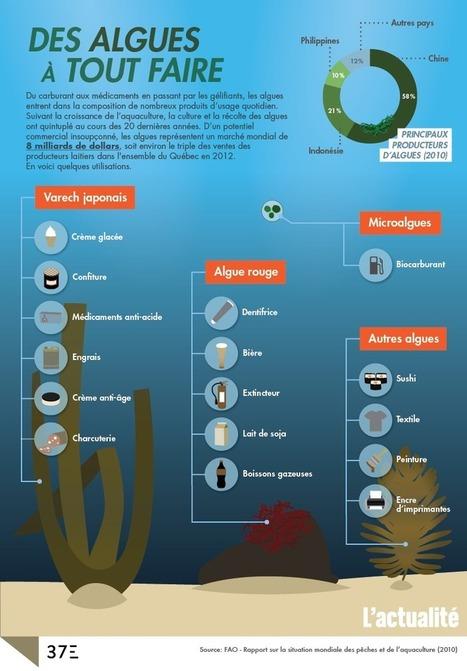 Infographie — Des algues à tout faire - L'actualité | infographie | Scoop.it