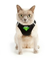 Cat Walking Harness   Dog Products   Scoop.it