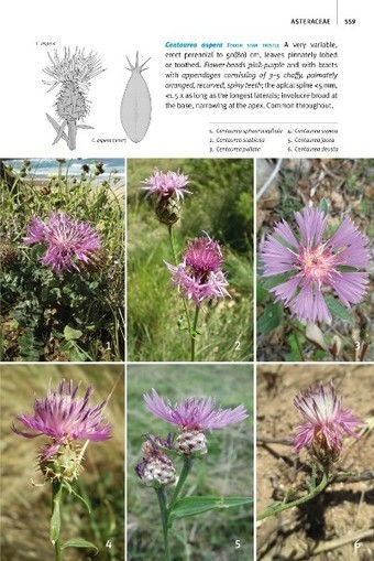 Field Guide to the Wild Flowers of the Western Mediterranean | HORTICULTURE BOTANIQUE | Scoop.it