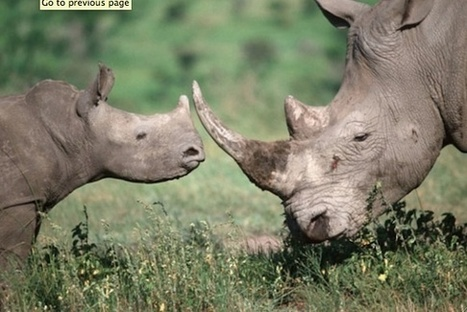 One More Generation's Carter & Olivia Ries are Helping to Conserve South Africa's Rhinos | safarious | Scoop.it