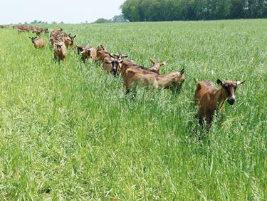 Un gros déficit de lait de chèvres | Agriculture en Dordogne | Scoop.it